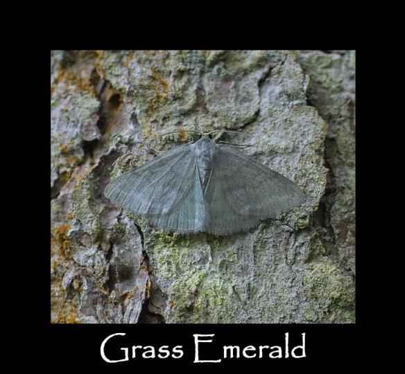 L Grass Emerald (2)