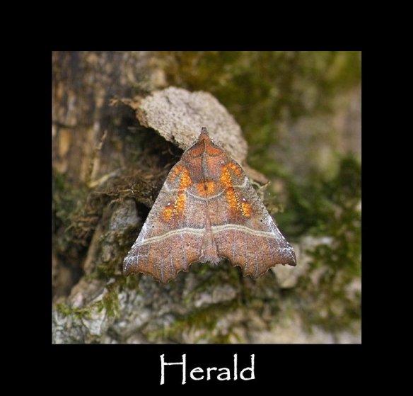 L Herald (2)