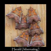 Garden Moths - Diary 011 November