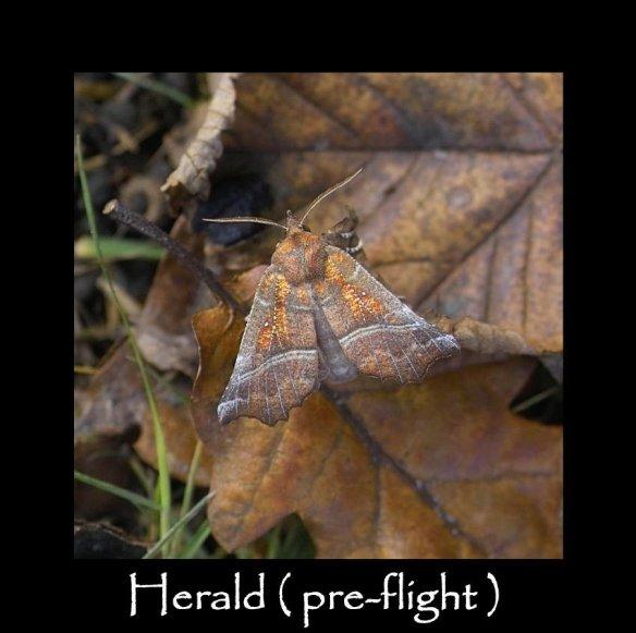 L Herald ( pre flight )