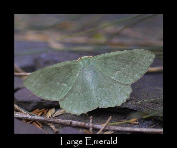 L Large Emerald (2)
