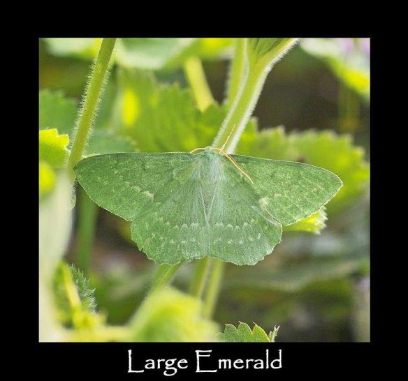 L Large Emerald