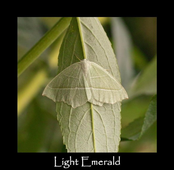 L Light Emerald (2)