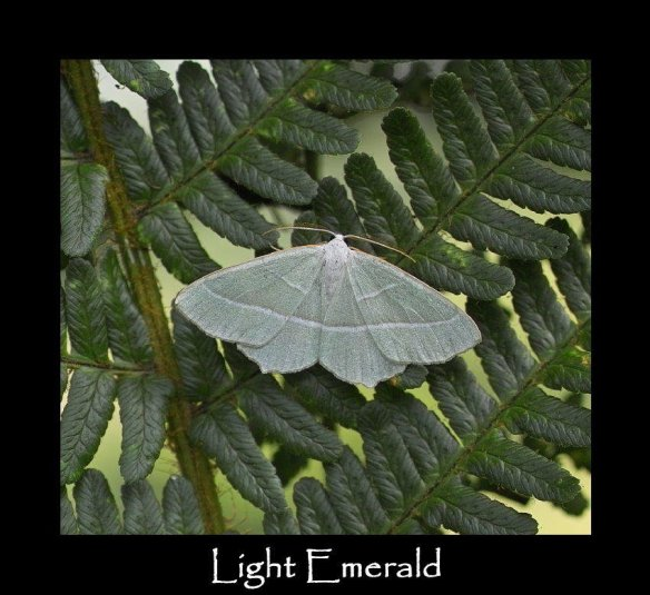 L Light Emerald
