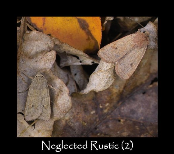 L Neglected Rustic (2)