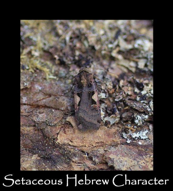 L Setaceous Hebrew Character (2)