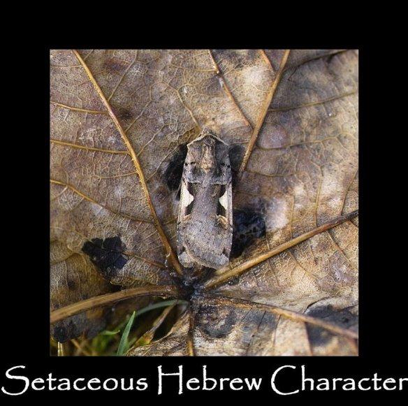 L Setaceous Hebrew Character 2