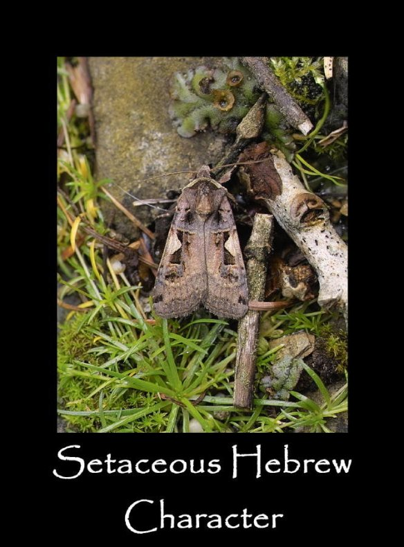 L Setaceous Hebrew Character