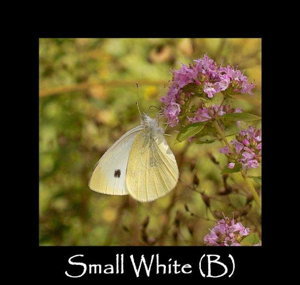 L Small White (B) (2)