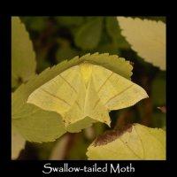 Garden Moths - Diary 08 August