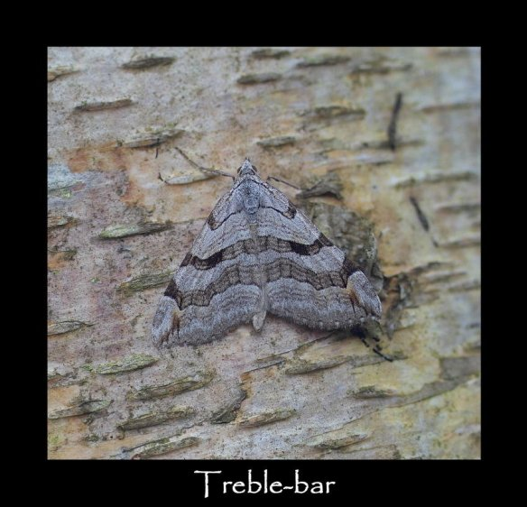 L Treble-bar