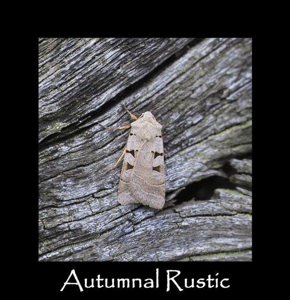 M Autumnal Rustic