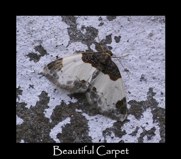 M Beautiful Carpet