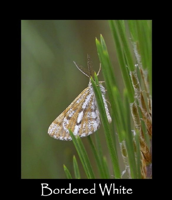 M Bordered White