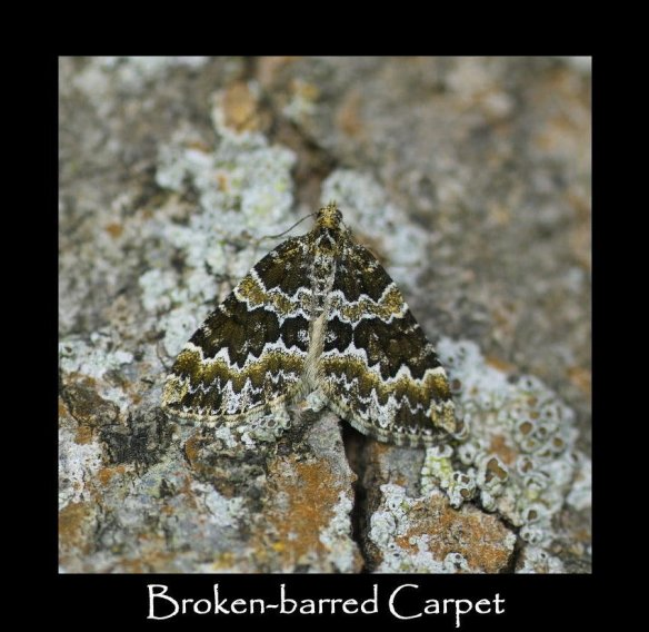 M Broken-barred Carpet