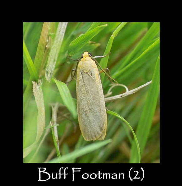 M Buff Footman ( 2 ) (2)