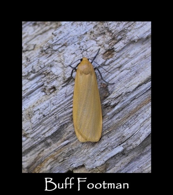 M Buff Footman 2