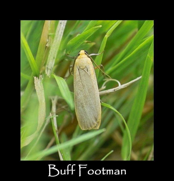 M Buff Footman