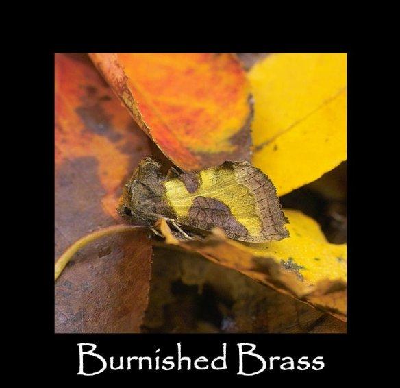 M Burnished Brass (2)