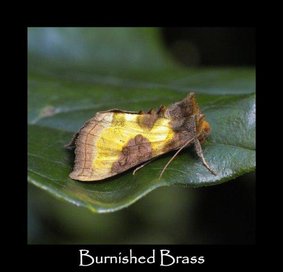 M Burnished Brass