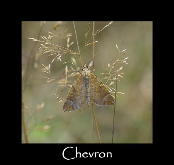 M Chevron (2)