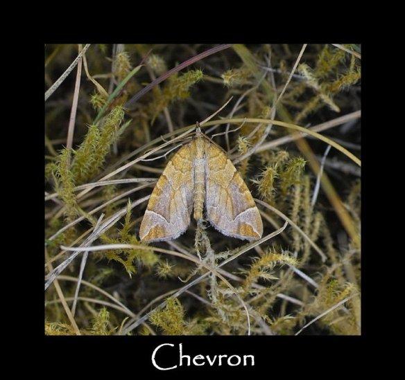 M Chevron