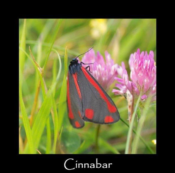 M Cinnabar