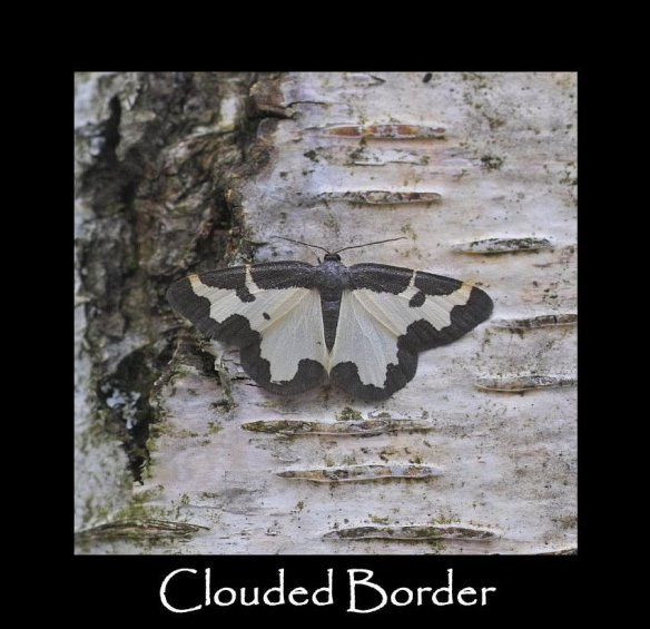 M Clouded Border