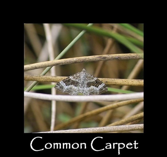M Common Carpet (2)