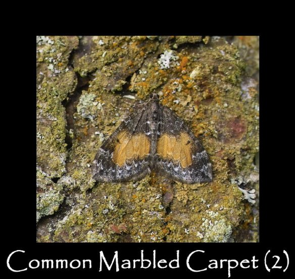M Common Marbled Carpet 2 (2)