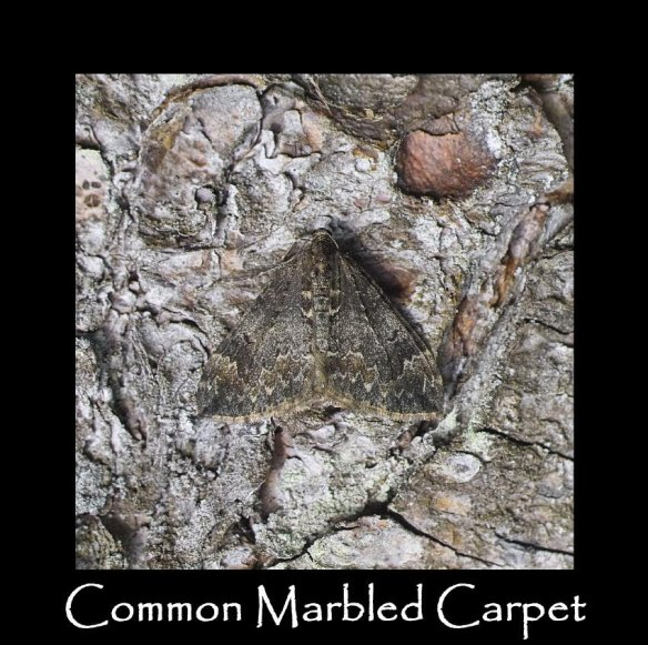 M Common Marbled Carpet 2