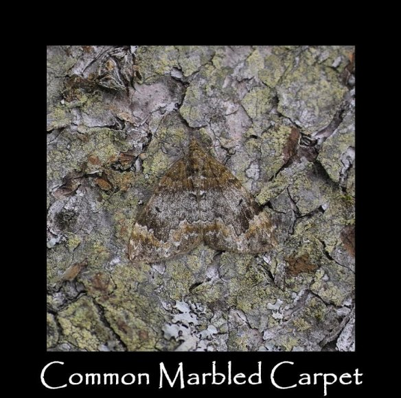 M Common Marbled Carpet 3
