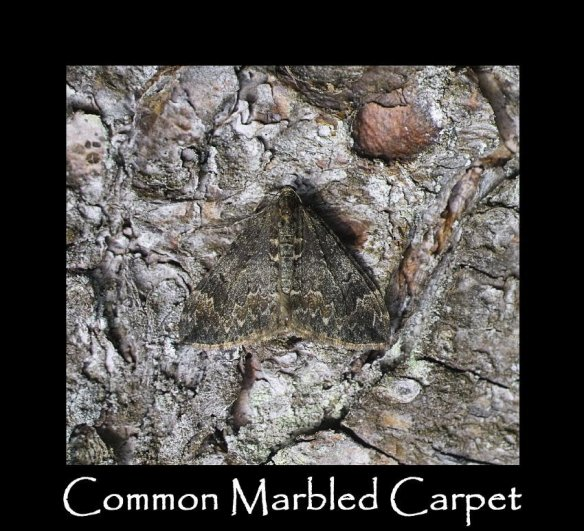 M Common Marbled Carpet