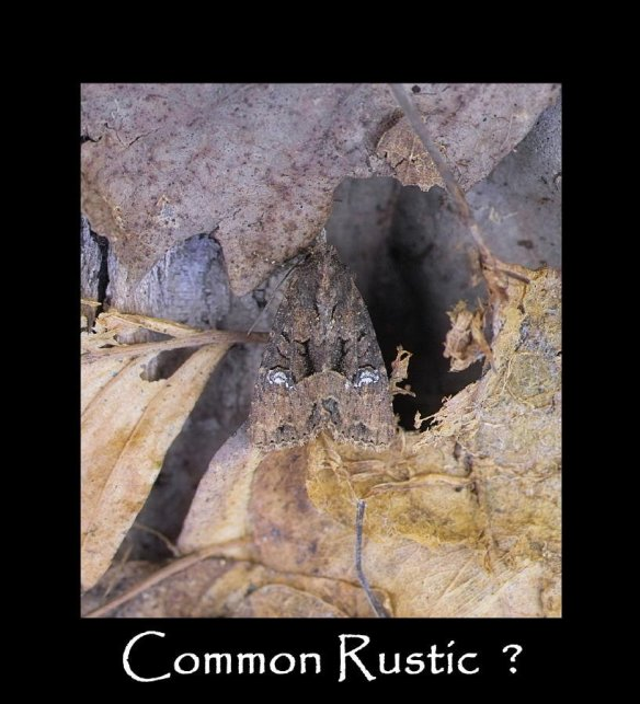 M Common Rustic (2) (2)
