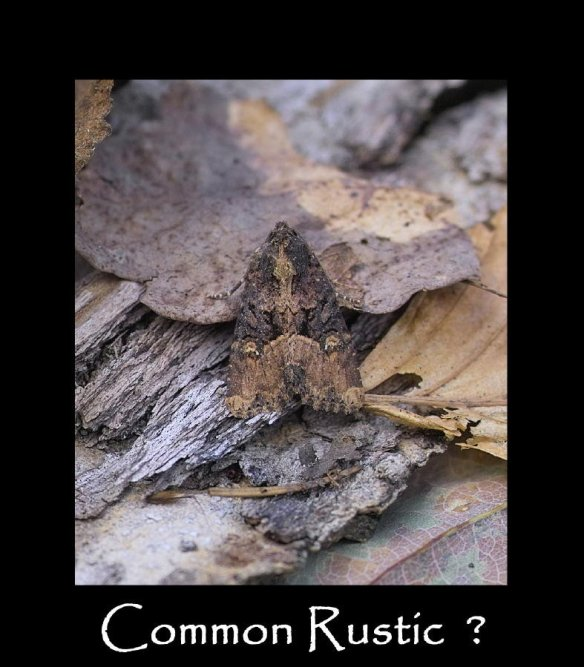 M Common Rustic 2