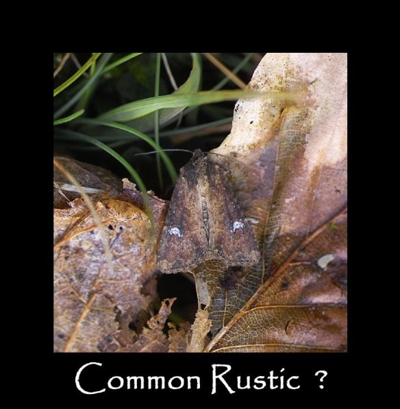 M Common Rustic (3)
