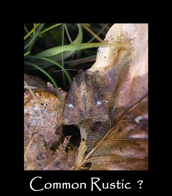 M Common Rustic