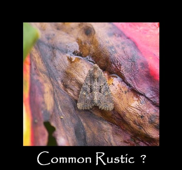 M Common Rustic