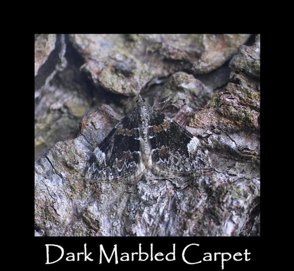 M Dark Marbled Carpet 2 (2)