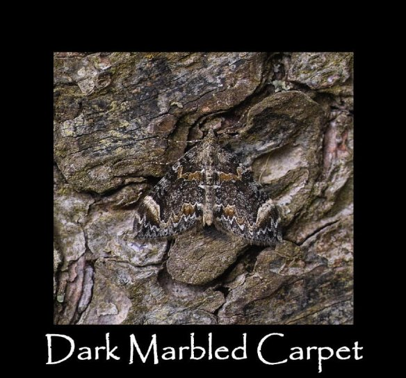 M Dark Marbled Carpet (2)