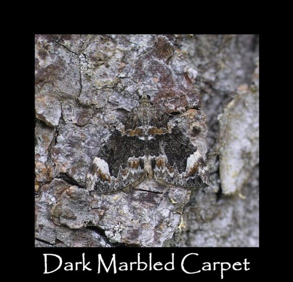 M Dark Marbled Carpet