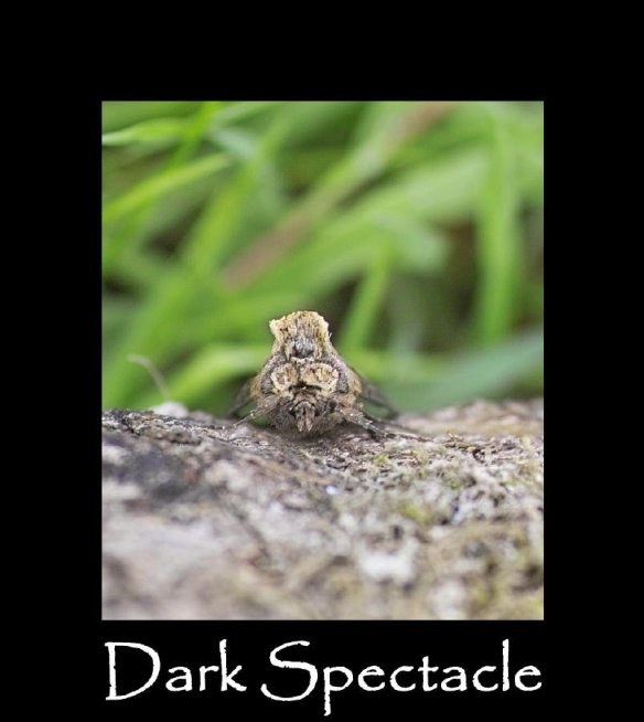 M Dark Spectacle (2)