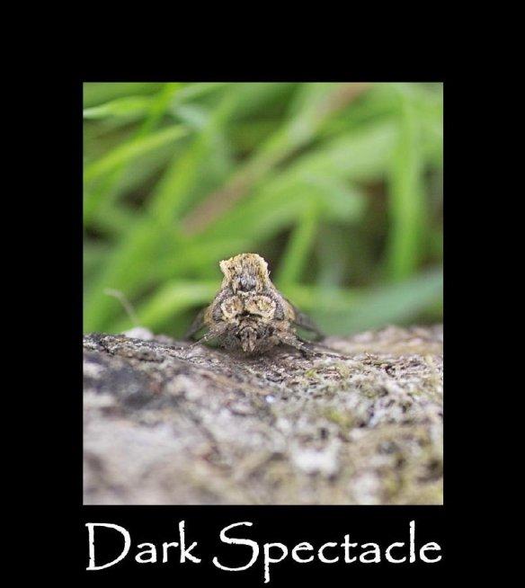 M Dark Spectacle (2)
