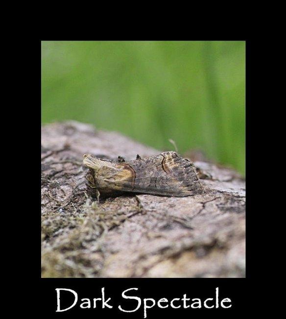 M Dark Spectacle (4)