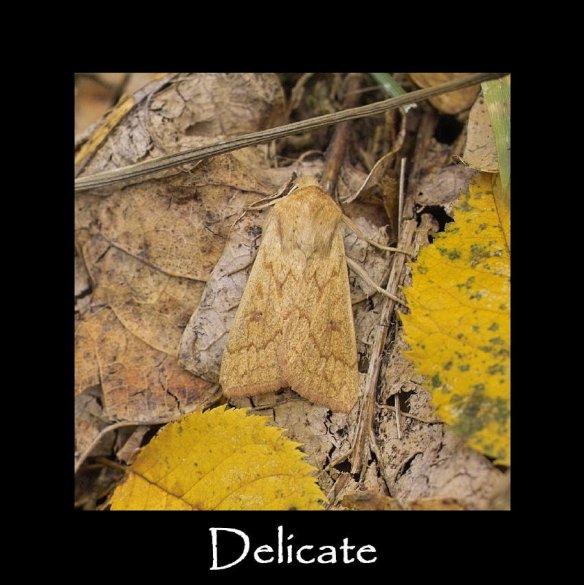 M Delicate (2)