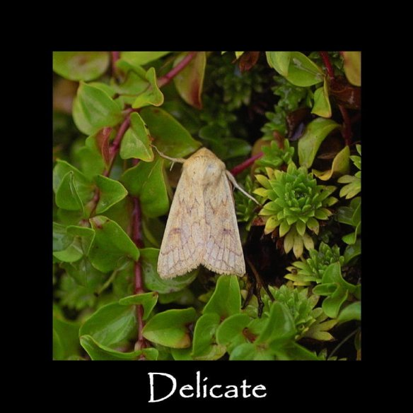 M Delicate