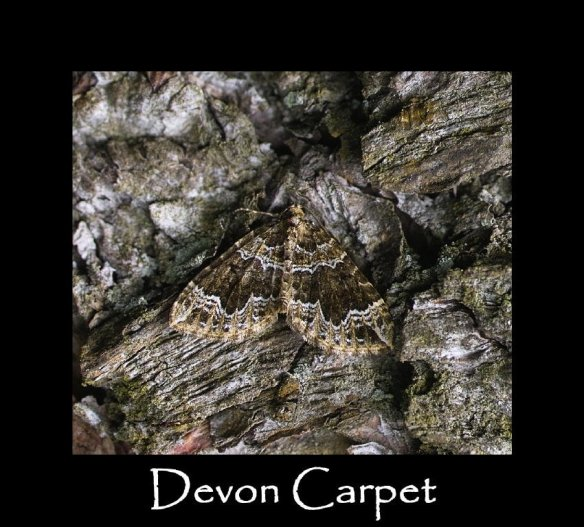 M Devon Carpet (2)