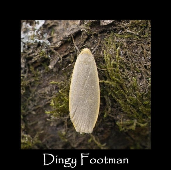 M Dingy Footman