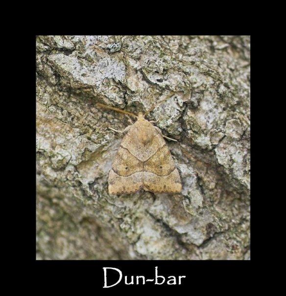 M Dun-bar 2