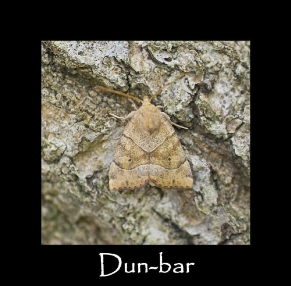 M Dun-bar (2)